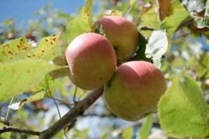 Признаки и лечение дефицита магния у растений