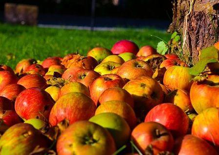 Чем подкормить деревья осенью