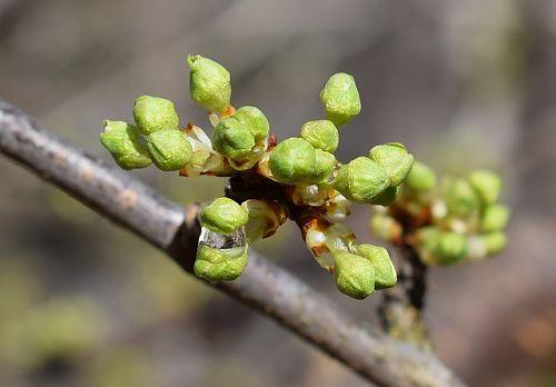 Чем опрыскать деревья по зеленому конусу