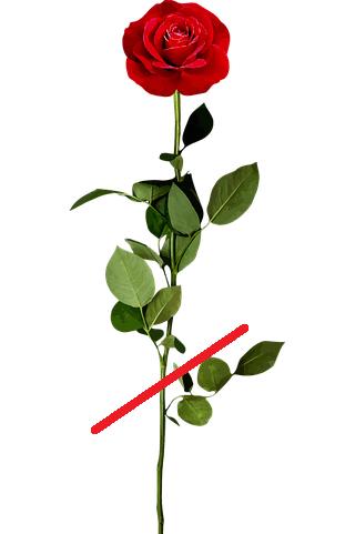 обрезка розы после цветения