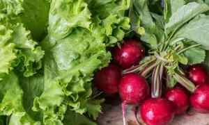 4 способа посадить редис: открытом грунте, теплице, кассетах, под зиму