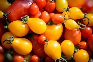 Супер подкормка помидоров – плодов будет  в 10 раз больше