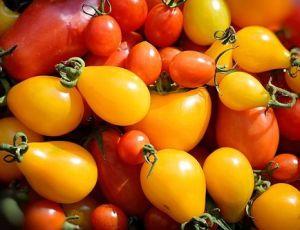 Супер подкормка помидоров - плодов будет  в 10 раз больше