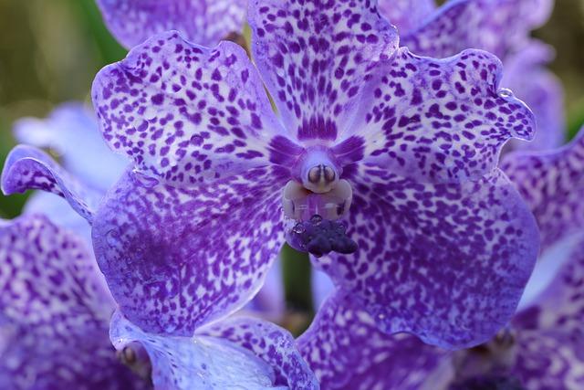 орхидея как ухаживать за ней