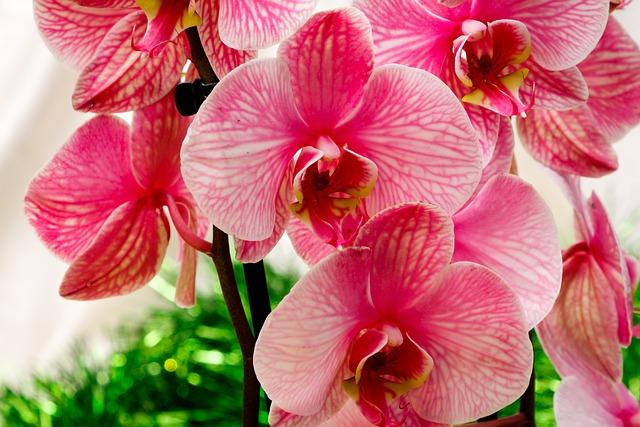 Орхидеи для начинающих