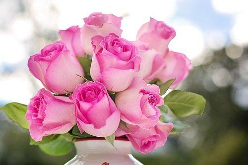 Вкорінення троянди з букета