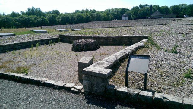 Trauriger Überrest der Goethe-Eiche im ehemaligen KZ Buchenwald