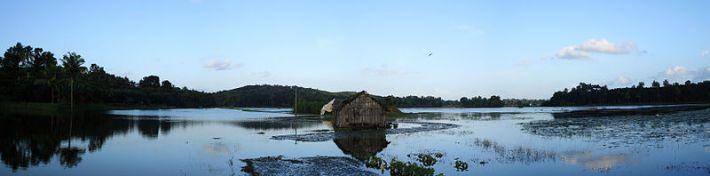 Um arrozal em Kerala