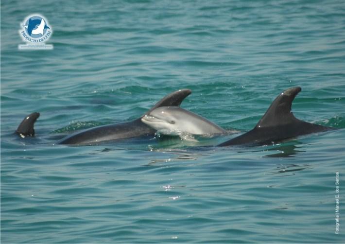 golfinhos_do_sado