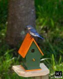 3- Female inspects the new birdhouse.