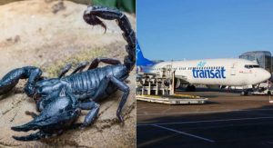Scorpion stings passenger on Air Transat flight