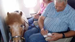 Survey: Consumer attitudes towards service animals during travel revealed 4