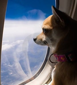 Alaska Airlines says no to emotional support animals 11