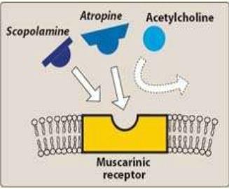 atrophine-1