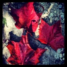 Early leaf peeping