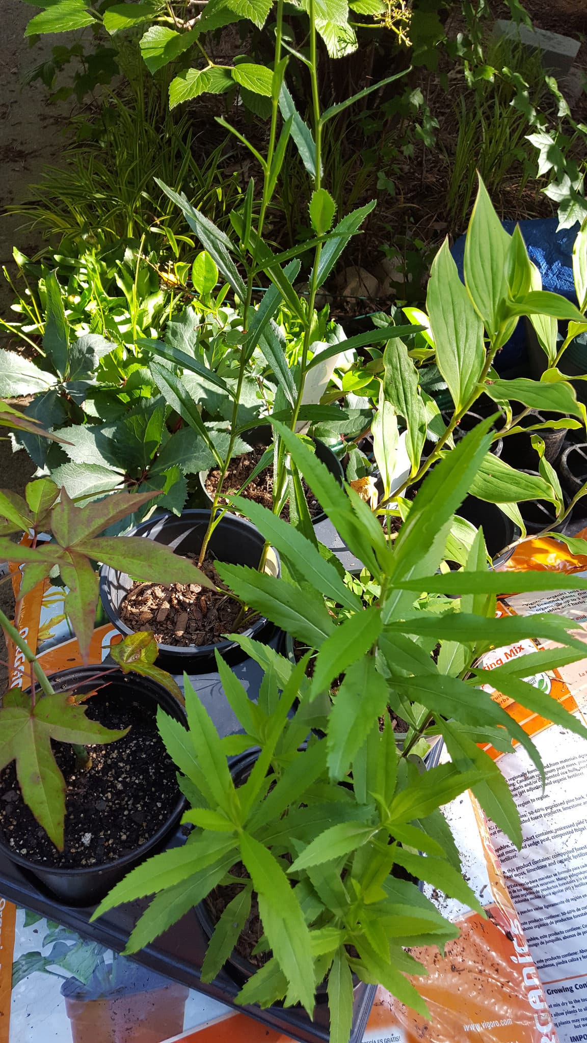 Plant Sale 3