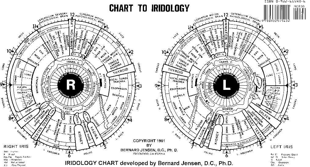 Chart of the iris developed by dr bernard jensen also sclera  view to your health rh aviewtoyourhealth wordpress