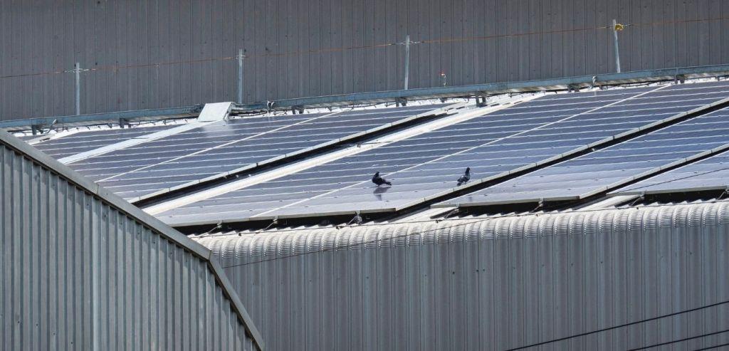 birds on solar panels