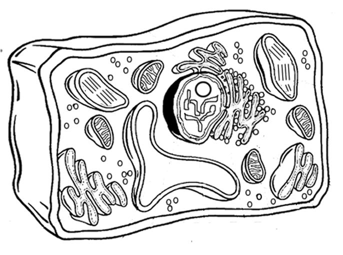 pics photos 3d plant cell diagram with labels