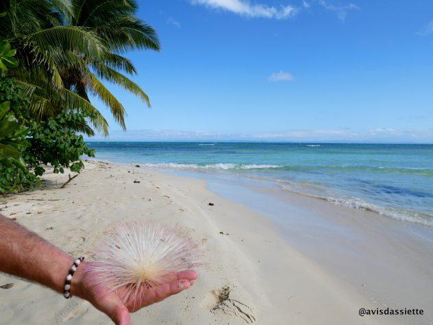 activites voyage ile aux natte sainte-marie madasgascar plage
