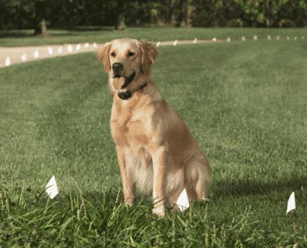 Collier / Clôture Anti Fugue pour chien- Explications, conseils et guide d'achat