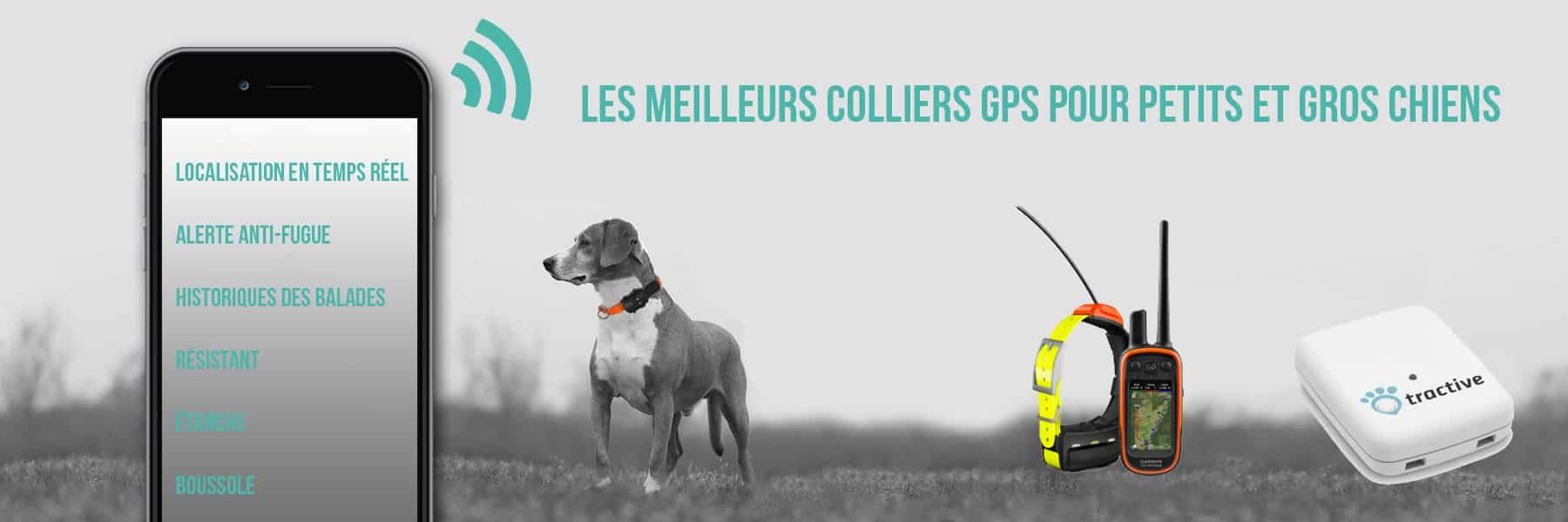Classement des meilleurs colliers GPS pour chien