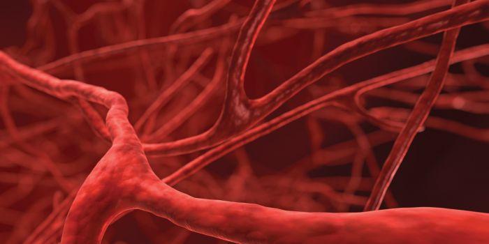 gruppi sanguigno quando donare sangue o plasma