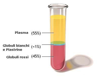 plasma, globuli rossi,globuli bianchi e piastrine
