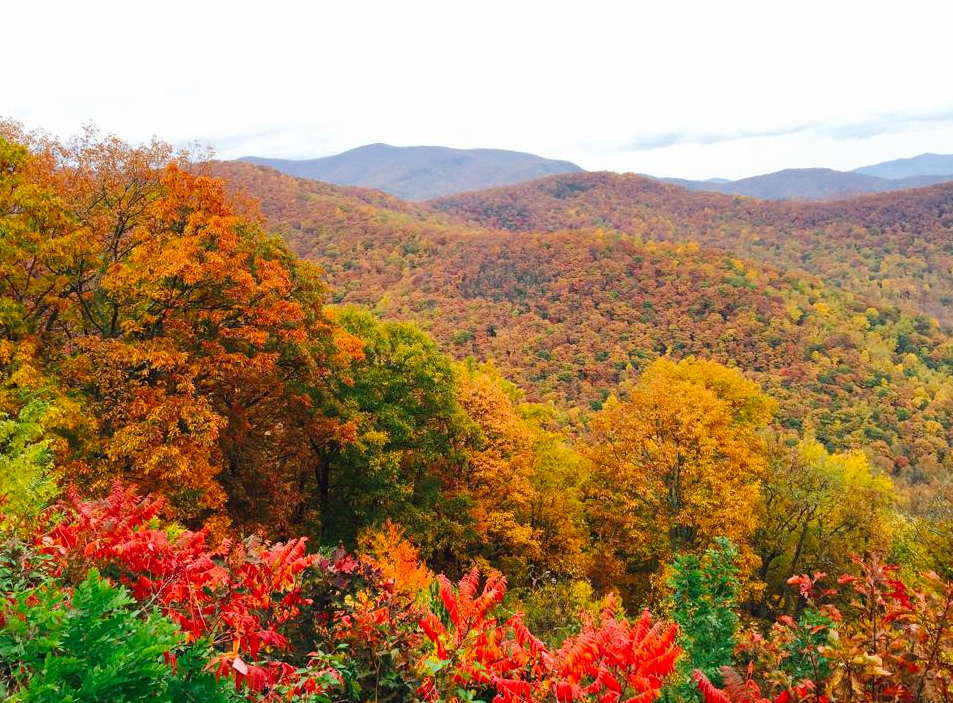 a guide to asheville