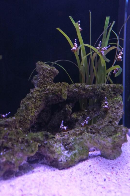 many tiny shrimps