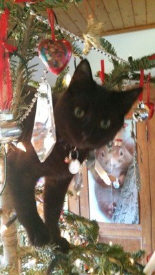 Midnight Kitten just loves Christmas at Avoca Gallery.