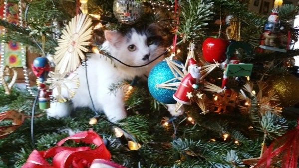 Candy kitten prowls the gallery tree.