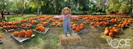 Scarecrow - Final!