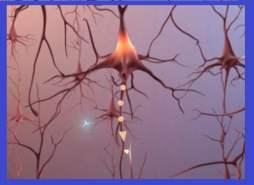 maladie d'Alzheimer- les neurones
