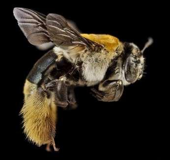 L'abeille et les bienfaits du miel