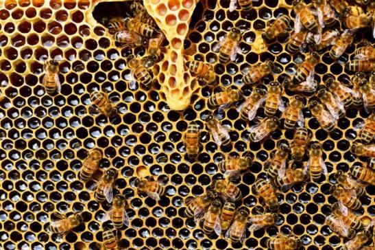 la ruche et les bienfaits du miel