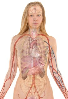 cancer de la plèvre. le corps humain