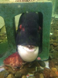 Woah! You never know what you might see when visiting an aquarium. You sure don't see that face every day.