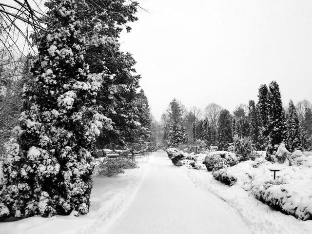 Ninge, ninge, babele se linge
