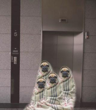 È possibile introdurre animali in ascensore condominiale: l'Avvocato Antoci lo spiega in questo articolo