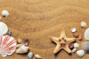 Sabbia e conchiglie - Avvocato Antoci