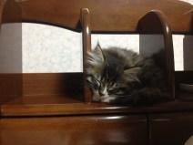 Mary sleeping on the desk