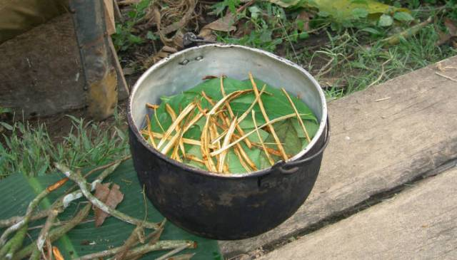 Ayahuasca Ceremonies up to '1,000 Years Old'