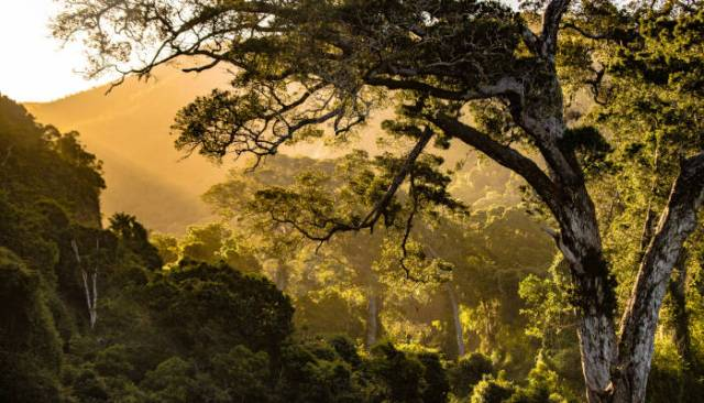 Why Nature is good for addiction and health