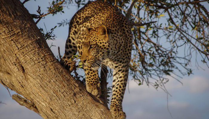 Can a Leopard Change its Spots?