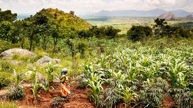 Agribusiness Ghana