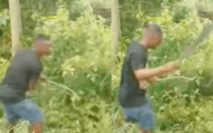 Notorious thief forced to weed bushy acres of land as punishment for stealing