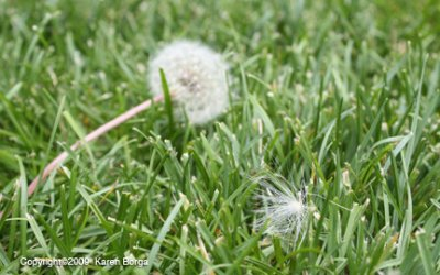 Miracles Come As Milkweed Seeds
