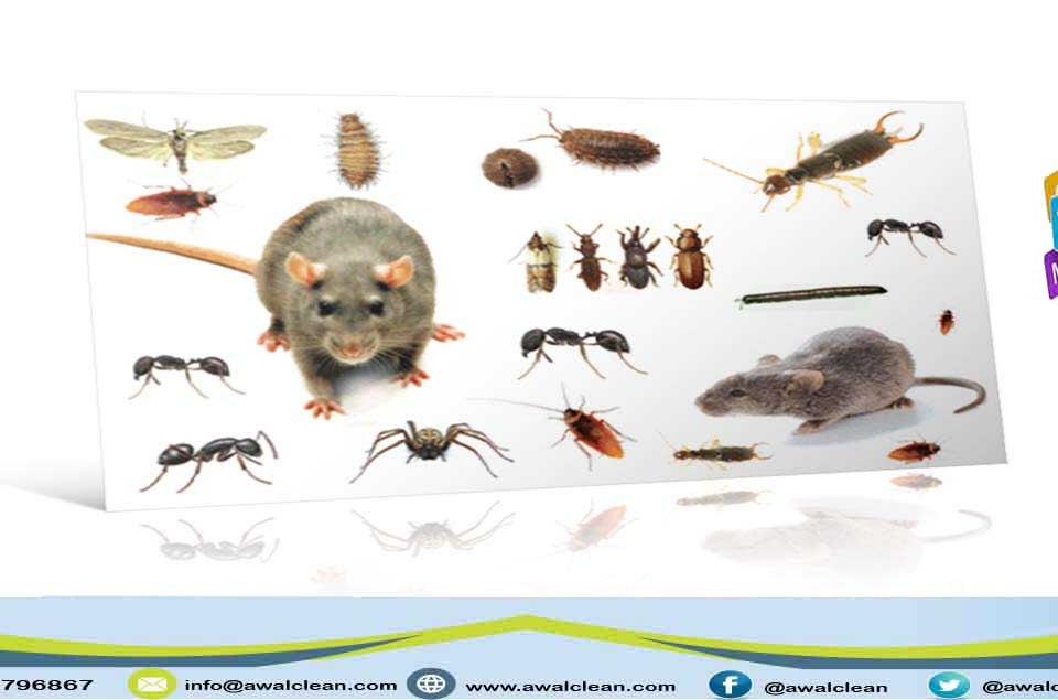 صورة لمجموعة من الحشرات