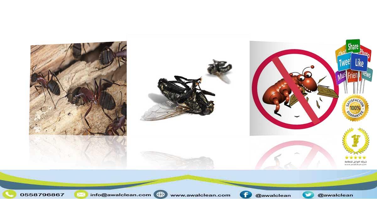 حشرات ميتة بعد مكافحتها